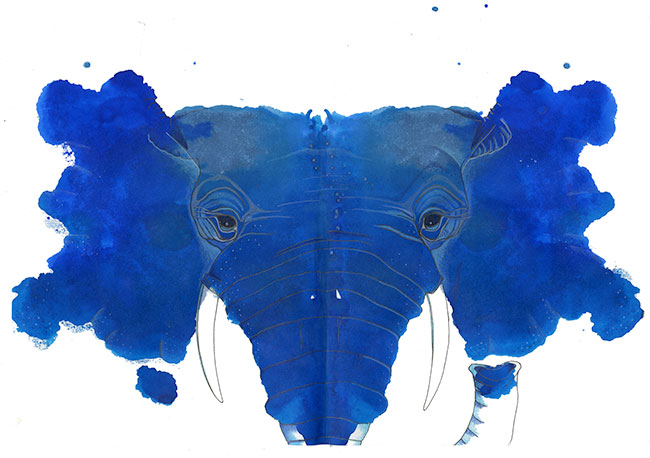elephant017-web